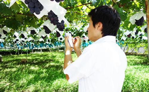 ぶどう畑でメモをとる農ログメンバー