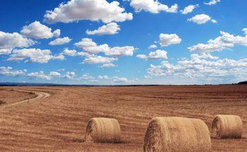 TPPって何?農業に与える影響と農家さんが取るべき対策