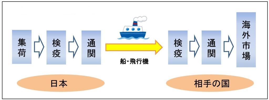 農産物の輸出の流れ。日本、輸出先、両方で検疫と通関が必要