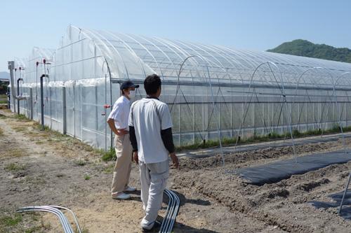 畑を見ながら村上トマト農園さんと販路開拓の打合せをする農ログメンバー原