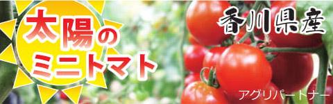 太陽のミニトマトの商品ラベル
