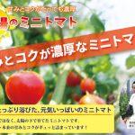 農ログがトマト農家さんと共にプロデュースした、「太陽のミニトマト」「太陽のシシリアンルージュ」が販売開始